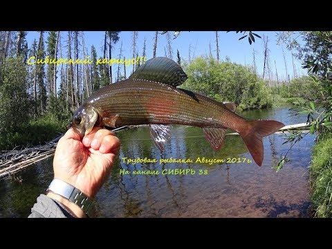 Августовская рыбалка на хариуса в Сибири.