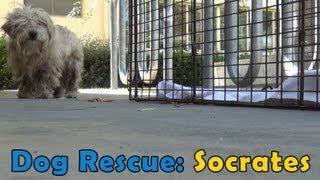 Dog Rescue: Socrates.  Hope For Paws & Bill Foundation.  Music by Derek Luttrell (Please share)