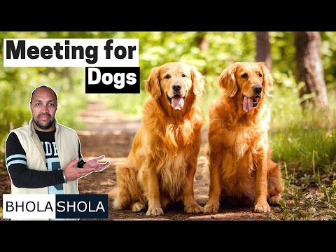 Pet Care - Meeting for Dog - Bhola Shola