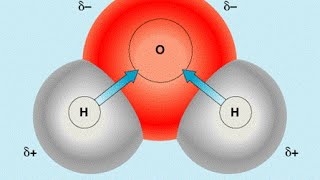 Химический состав клетки. Ф 1. Урок биологии.
