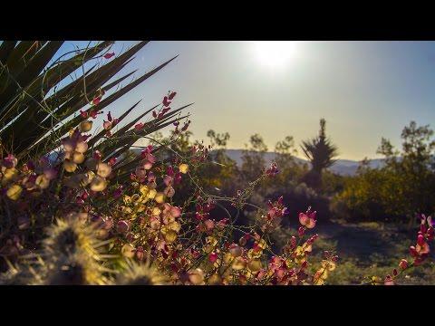 Sunrise in Twentynine Palms California