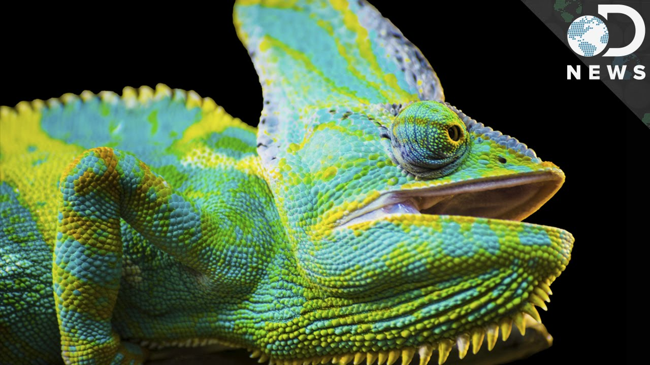 how do chameleons change colors