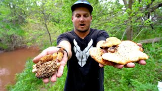 SAFE TO EAT?? Catch n' Cook WILD MUSHROOMS from the Forest!!!