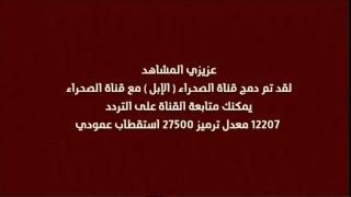 البث المباشر | قناة الصحراء الابل