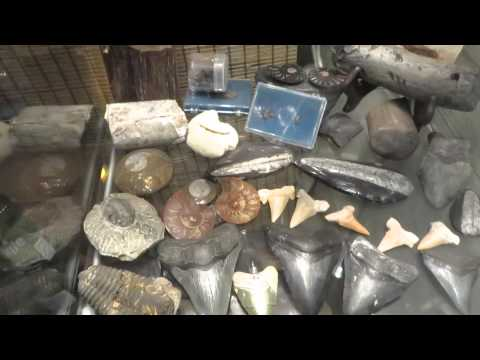 2013 Fossil and Mineral Collection