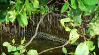 Daintree River Wildlife Tour, Queensland Australia