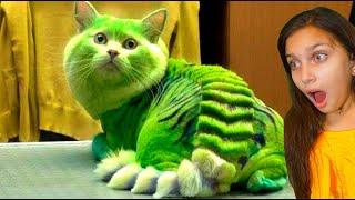 СМЕШНЫЕ КОТЯТА ИДУТ В ШКОЛУ в ЛАЙК и ТИКТОК 4 Коты и Собаки ЗАСМЕЙСЯ ЧЕЛЛЕНДЖ Funny Cats Валеришка
