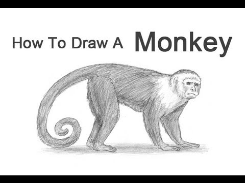 how to draw a monkey capuchin youtube rh youtube com diagram of a monkey's brain labelled diagram of a monkey skull