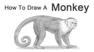 How to Draw a Monkey (Capuchin)