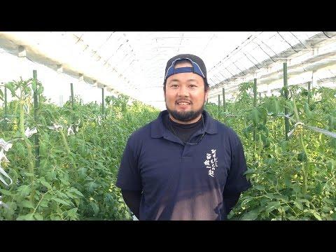 次世代養液土耕システム「ゼロアグリ」