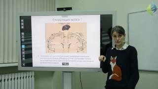 Урок 3  Модификация мозга и поведение +