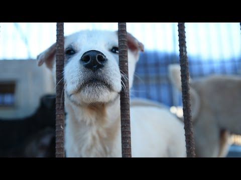200 dogs rescued from dog meat farm