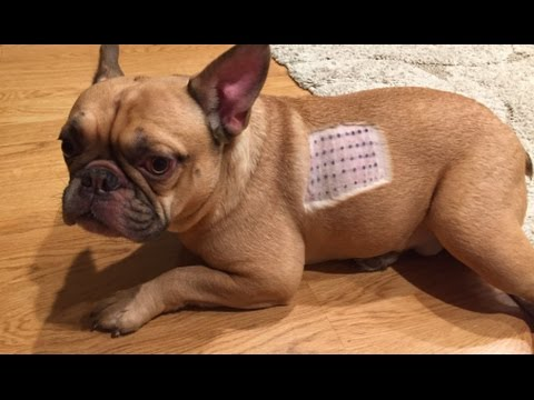 Dog Allergy Test!