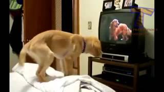 Животные смотрят телевизор