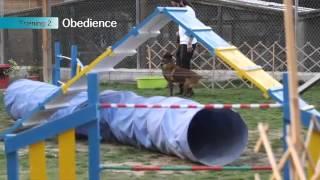 Dog Training By The Master Hayssam Chedid