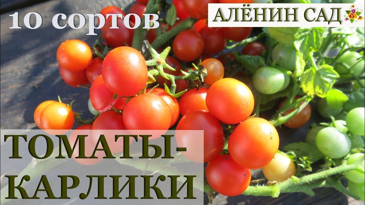 10 лучших сортов томатов для балкона / Ампельные томаты / Особенности выращивания