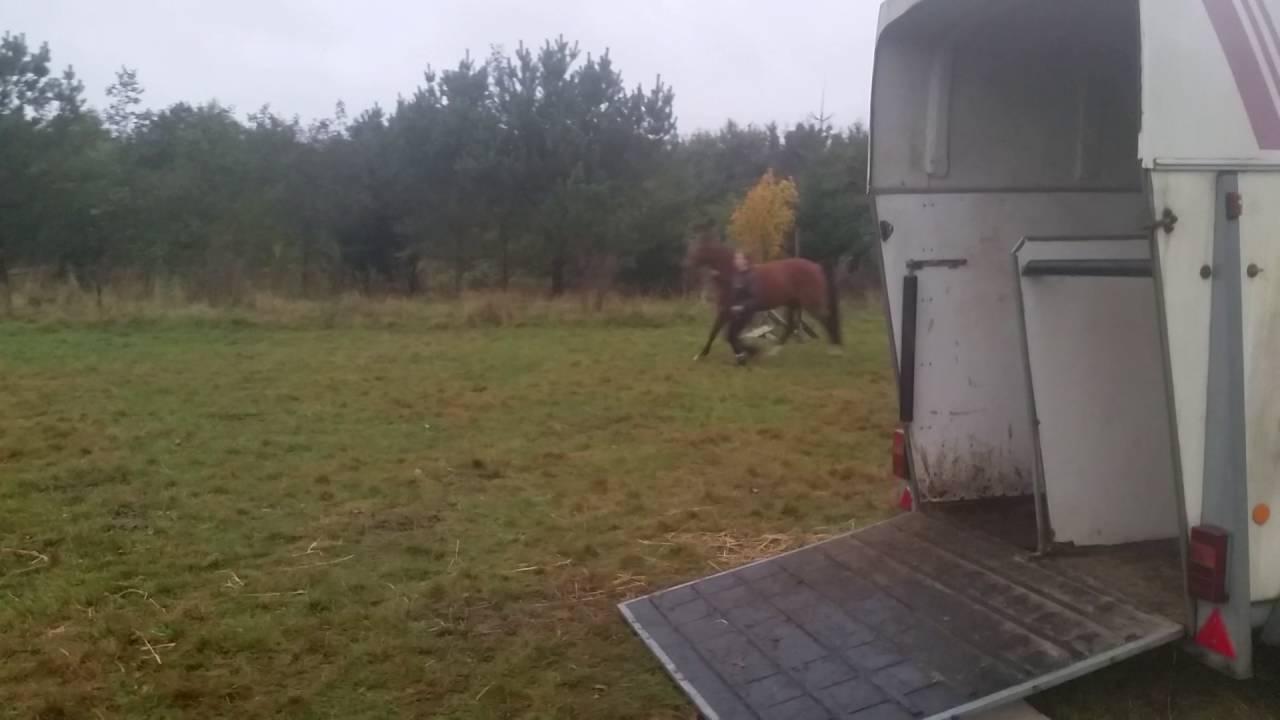 Hestevenlig Trailer træning MOTIVATION & ENERGI - YouTube