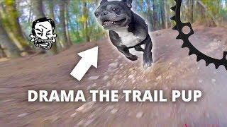 Drama the MTB Trail Dog - The worst