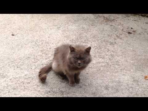 Gato miao miau (Isidoro)