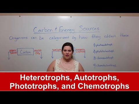 Heterotrophs, Autotrophs, Phototrophs, And Chemotrophs