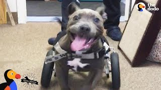 Rescued Pit Bull Puppy Runs For The First Time - CANTU | The Dodo Pittie Nation