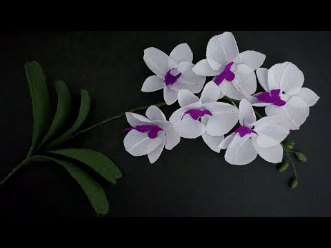 How To Make Paper Flower Crepe - Phalaenopsis Orchids Indoor Flowers Plant | DIY Paper Craft