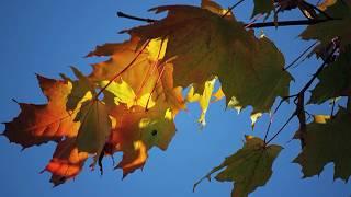 Francis Goya.  Natacha (Осенние пейзажи на фотографиях Владимира Морозова)