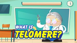 What is Telomere by Dr. Phimilion
