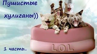 ПУШИСТЫЕ ХУЛИГАНЫ))  С котиками не соскучишься!  Cats bully