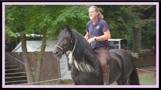 Das Pferd OSTWIND auf der Burg Satzvey (Familienausflug)