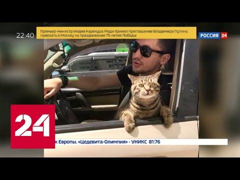 Внимание прессы зашкаливает: толстый кот Виктор стал настоящей звездой - Россия 24
