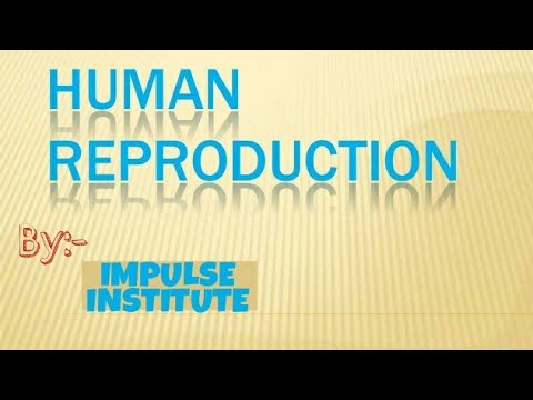 CHAPTER-3 (HUMAN REPRODUCTION) SOME IMPORTANT MCQ's For NEET AND AIIMS thumbnail