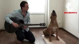 Дик знает ноты и поет под гитару)))