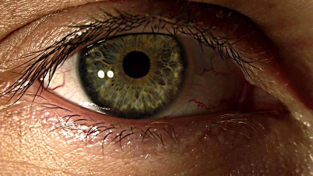 eye macro video canon 5d mk ii