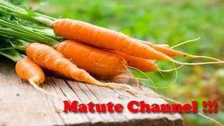 Propiedades de la zanahoria para la salud