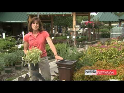 Gardening - Backyard Farmer - Container Plants