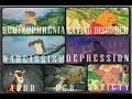 Cartoon Conspiracy Theory | Winnie the Pooh Characters all have Mental Disorders?!