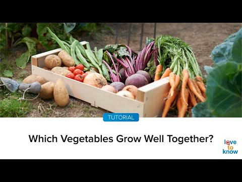 Which Vegetables Grow Well Together