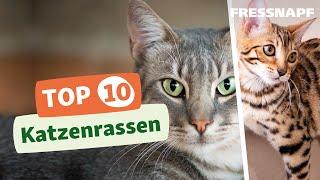 Top 10 Katzenrassen