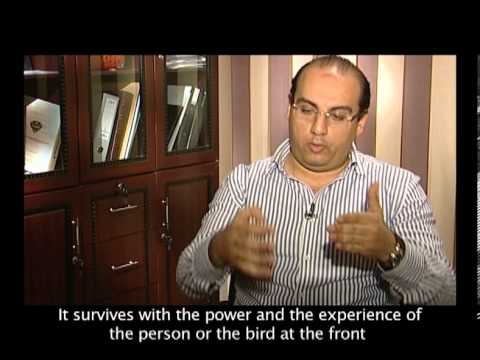 QNET EGYPT كيونت مصر
