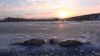 Рыбалка зимой от Михалыча. Ловля карася со льда(Супер уловистая удочка на карпа и карася. Боковые кивки, мормышки. Заказываем здесь http://mikhalych.com/ Сумасшедши..., 2014-12-21T19:29:14.000Z)
