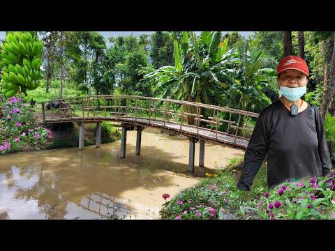 เกษตรผสมผสาน!!วิวหลักล้านสะพานสวยๆ..มีอยู่มีกิน