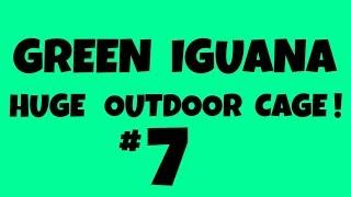 #7 -  Worlds Biggest Iguana Turd!!!