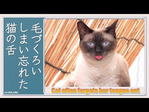 毛づくろい しまい忘れた 猫の舌