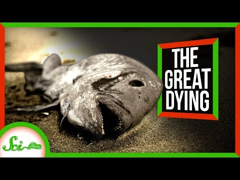 The Siberian Traps: A 250 Million Year Old Crime Scene