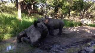 Gertjie & Matimba enjoying special bonding time