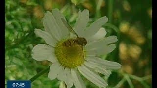 видео Відлякувач комарів, комах | Ультразвуковий, купити, відгуки