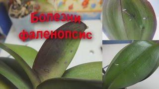 видео Болезни орхидей фаленопсис и их лечение