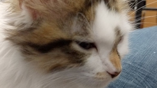 Kitten Close Up 2017-05-19 Take Two thumbnail