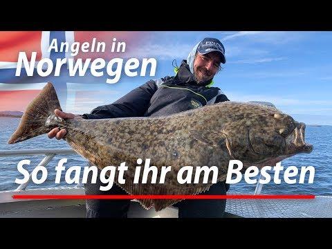 So Fangt Ihr Große Fische | Angeln Auf Heilbutt Mit Köderfisch Und Gummifisch | Angeln In Norwegen